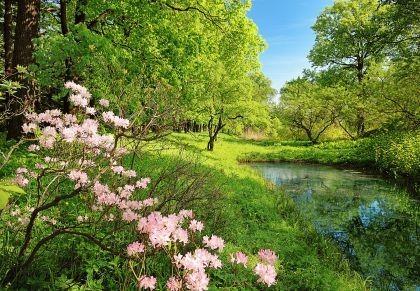 Drzewa_kwiaty dekoracje ścienne